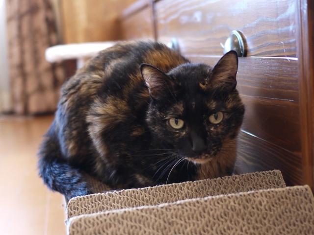 猫のお留守番 ワサビちゃん天ちゃん麦くん茶くん編。_a0143140_17034412.jpg