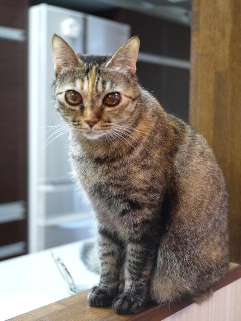 猫のお留守番 ワサビちゃん天ちゃん麦くん茶くん編。_a0143140_17051517.jpg