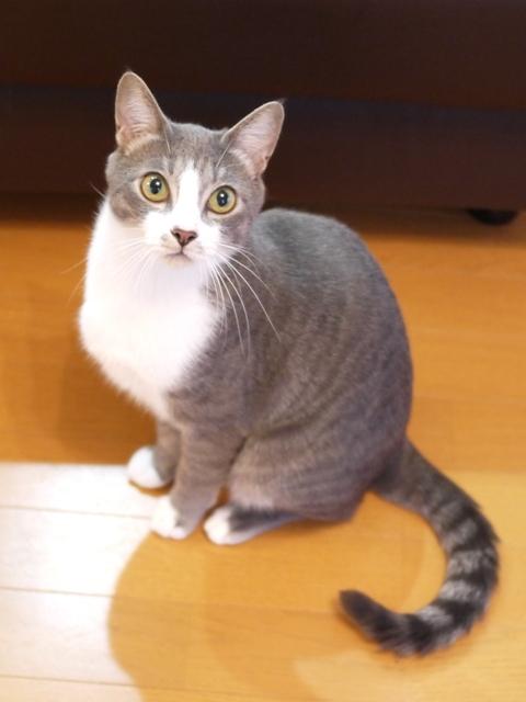 猫のお留守番 ワサビちゃん天ちゃん麦くん茶くん編。_a0143140_17054074.jpg