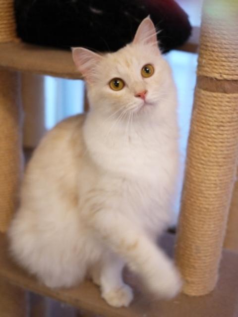 猫のお留守番 ワサビちゃん天ちゃん麦くん茶くん編。_a0143140_17060510.jpg