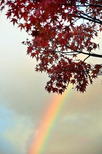 台風と虹と不機嫌_b0314043_08140692.jpg