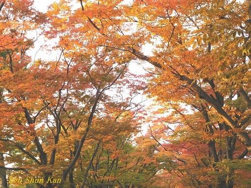 植物園のケヤキ並木   2017年10月30日_a0164068_23005546.jpg