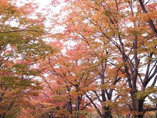 植物園のケヤキ並木   2017年10月30日_a0164068_23041122.jpg