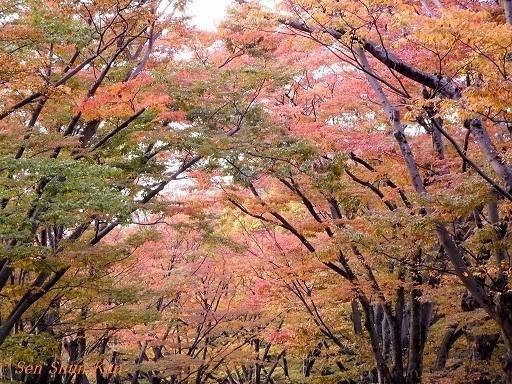 植物園のケヤキ並木   2017年10月30日_a0164068_23041230.jpg