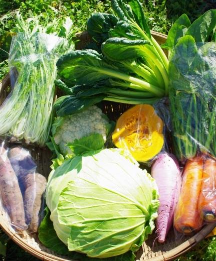 今週の野菜セット(10/31~11/4着)_c0110869_12093598.jpg
