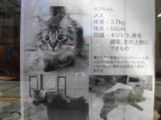迷い猫ちゃんです_e0367571_12245809.jpg