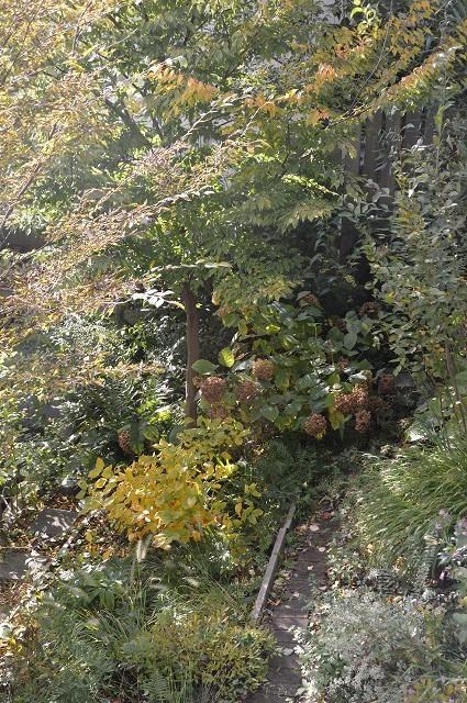 色づいてきましたよ…10月31日の庭。_c0124100_18105306.jpg