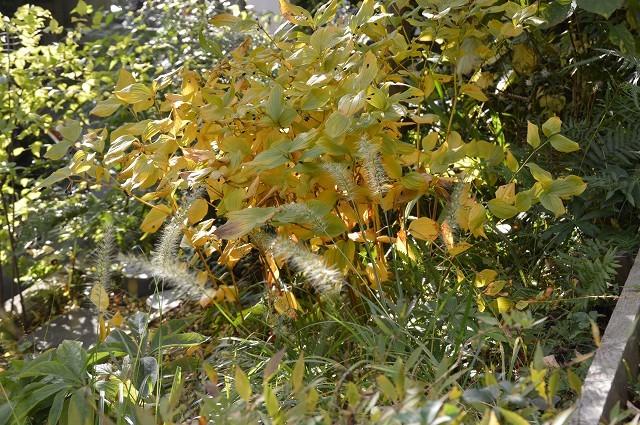 色づいてきましたよ…10月31日の庭。_c0124100_18105736.jpg