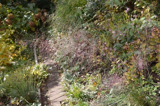 色づいてきましたよ…10月31日の庭。_c0124100_18110308.jpg