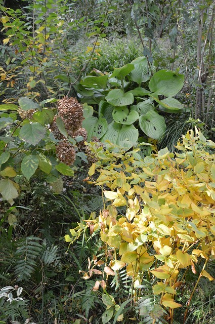 色づいてきましたよ…10月31日の庭。_c0124100_18110961.jpg