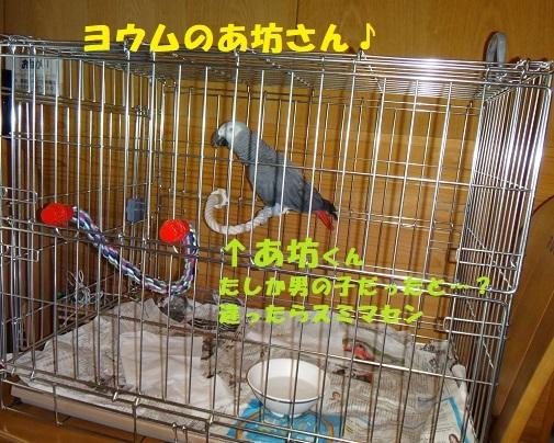 f0121712_10032158.jpg