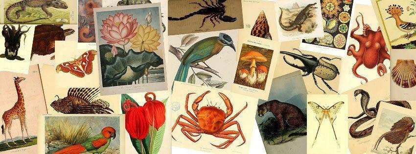 生物多様性遺産図書館_c0025115_21591848.jpg
