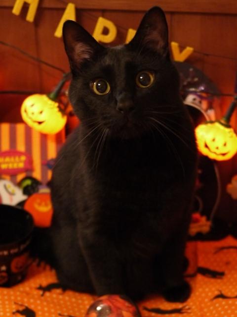 ハロウィン猫 ぎゃぉす編。_a0143140_22235243.jpg