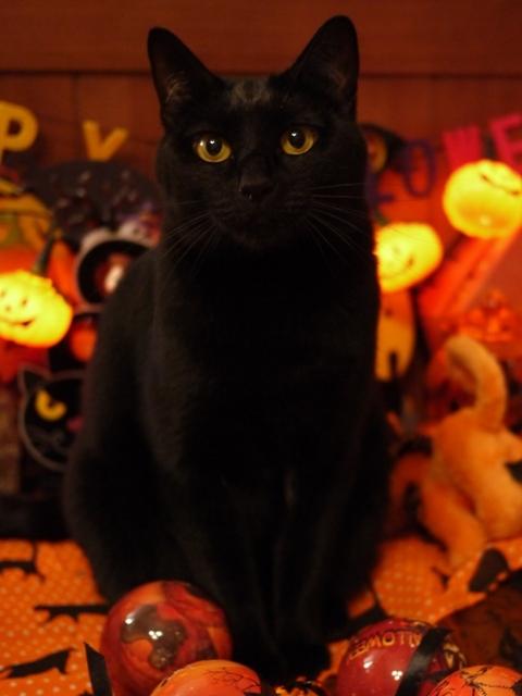 ハロウィン猫 てぃぁら編。_a0143140_22260418.jpg