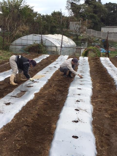 台風後の水も引いて 蚕豆&エンドウ豆の播種 本日開始します_c0222448_12143051.jpg