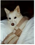 犬 & 寿司の日_f0053757_11334507.jpg