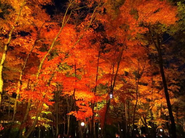 Art of Forest 2017 * 紅葉ライトアップ~ニコライ・バーグマン展示_f0236260_19312185.jpg