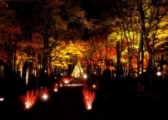 Art of Forest 2017 * 紅葉ライトアップ~ニコライ・バーグマン展示_f0236260_19353883.jpg