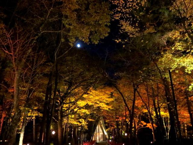 Art of Forest 2017 * 紅葉ライトアップ~ニコライ・バーグマン展示_f0236260_19363219.jpg