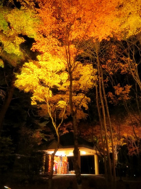 Art of Forest 2017 * 紅葉ライトアップ~ニコライ・バーグマン展示_f0236260_19403856.jpg