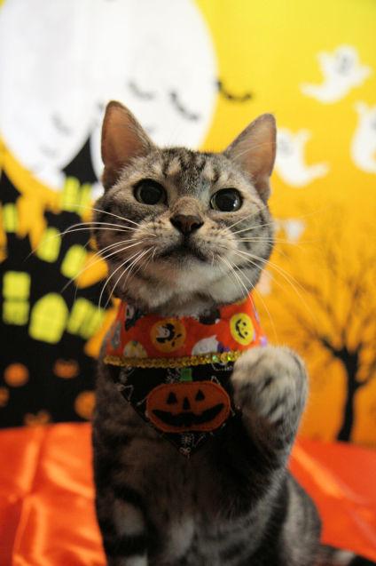 Happy Halloween 2017にゃ!_d0058182_15013710.jpg