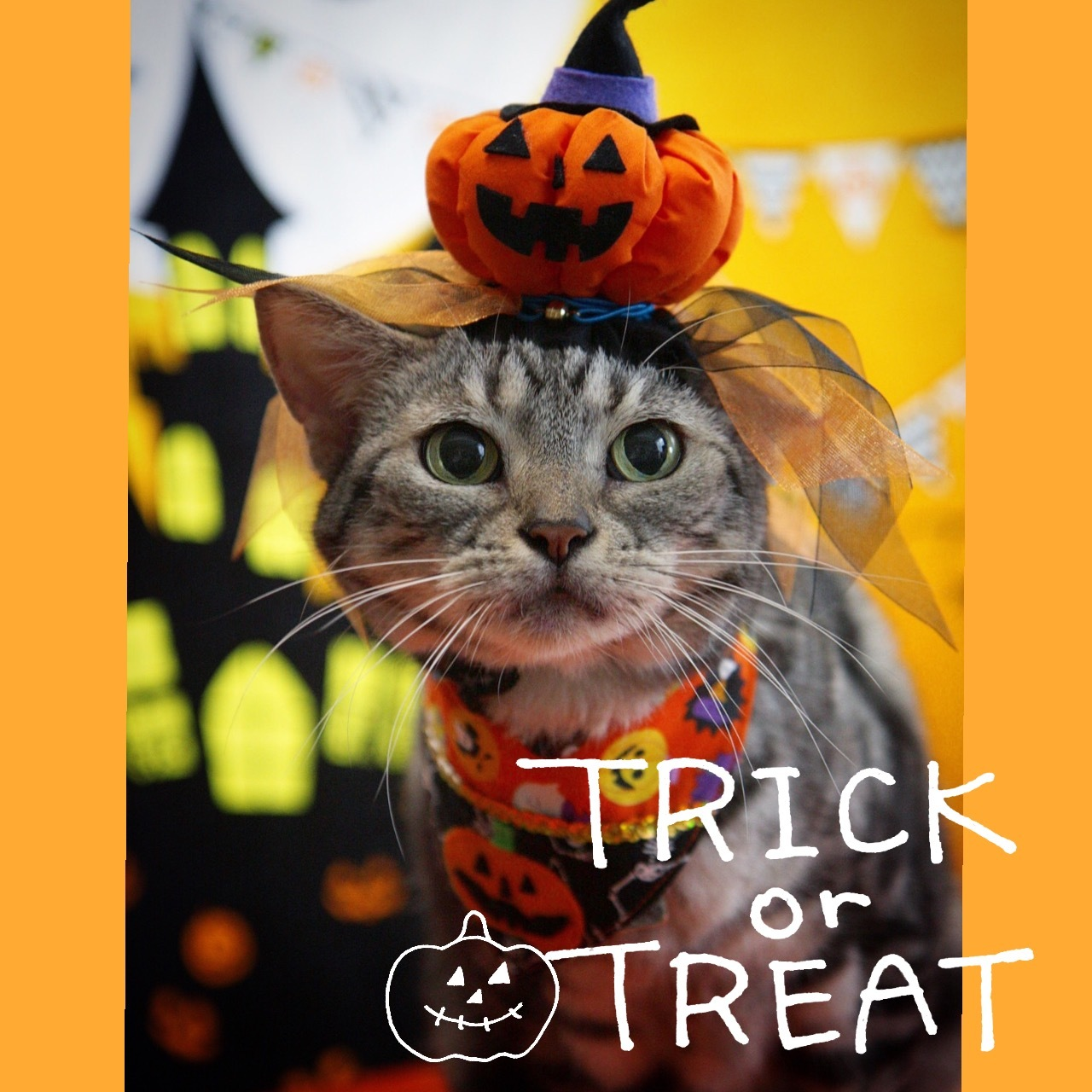 Happy Halloween 2017にゃ!_d0058182_15120801.jpg