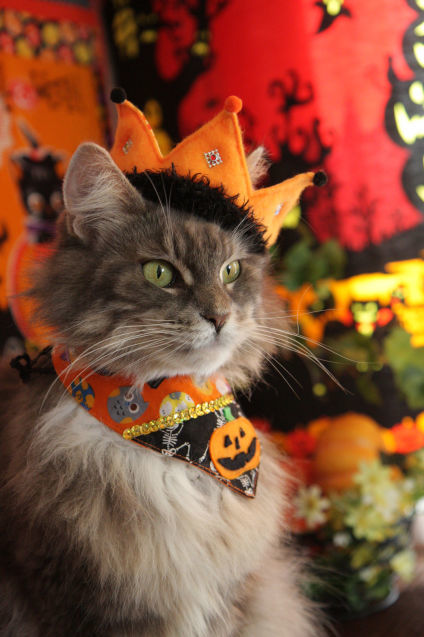 Happy Halloween 2017にゃ!_d0058182_15531413.jpg