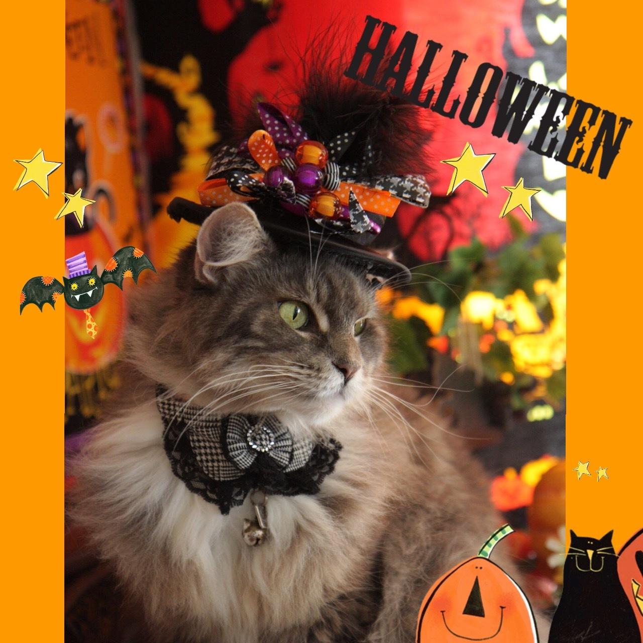 Happy Halloween 2017にゃ!_d0058182_20463807.jpg