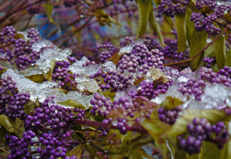 雪景色_d0162994_08455164.jpg