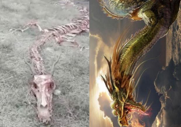 支那で「ついに伝説の龍の骨が発見された」!?:まさに伝説通りの姿形だった!?_a0348309_10411319.jpg