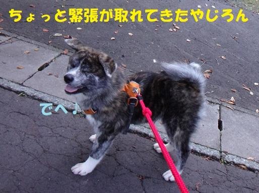 f0121712_14505143.jpg
