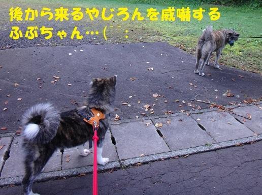 f0121712_14584770.jpg