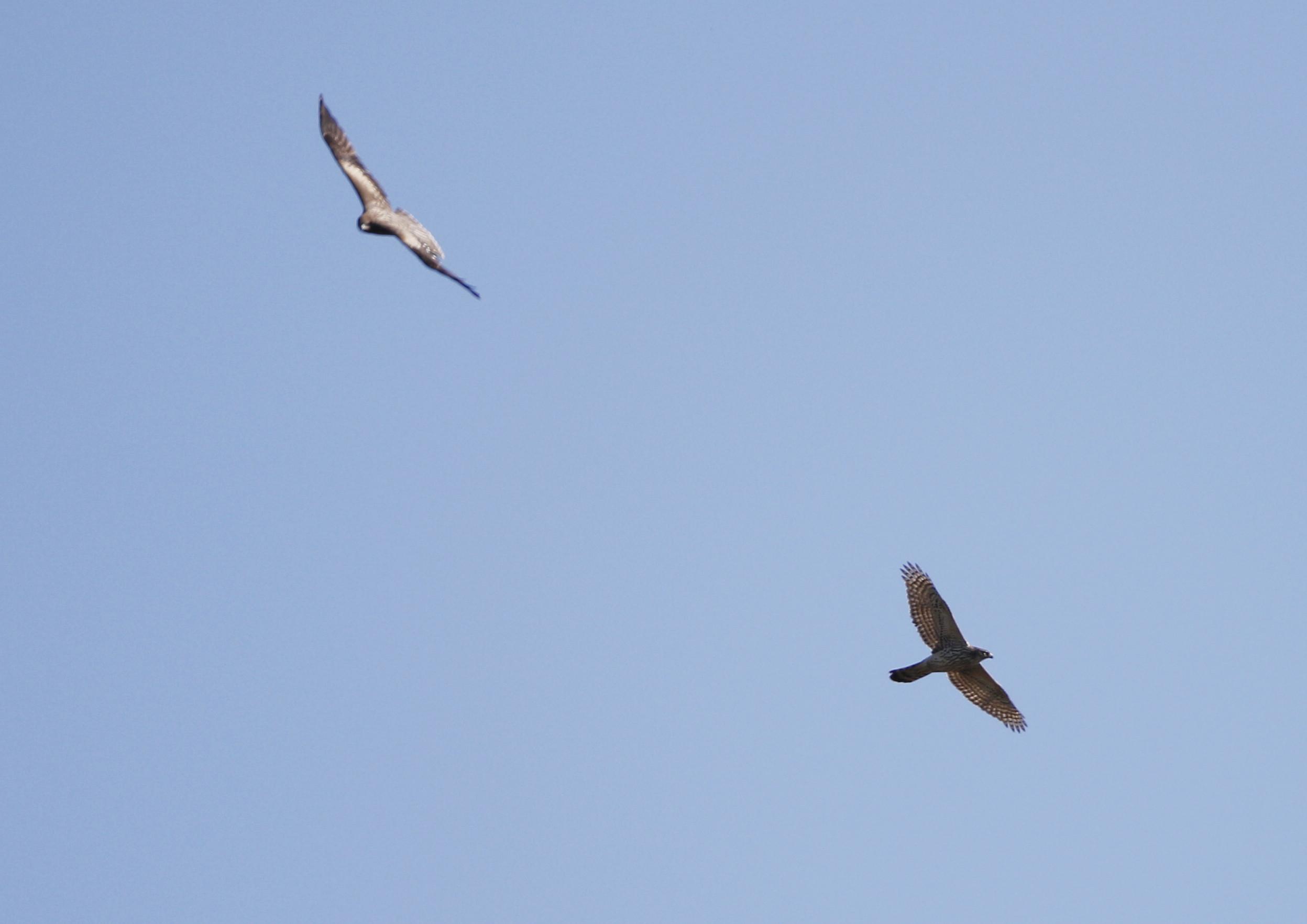 ミサゴ狙いも、飛ばない日は何を撮る_f0239515_21101521.jpg