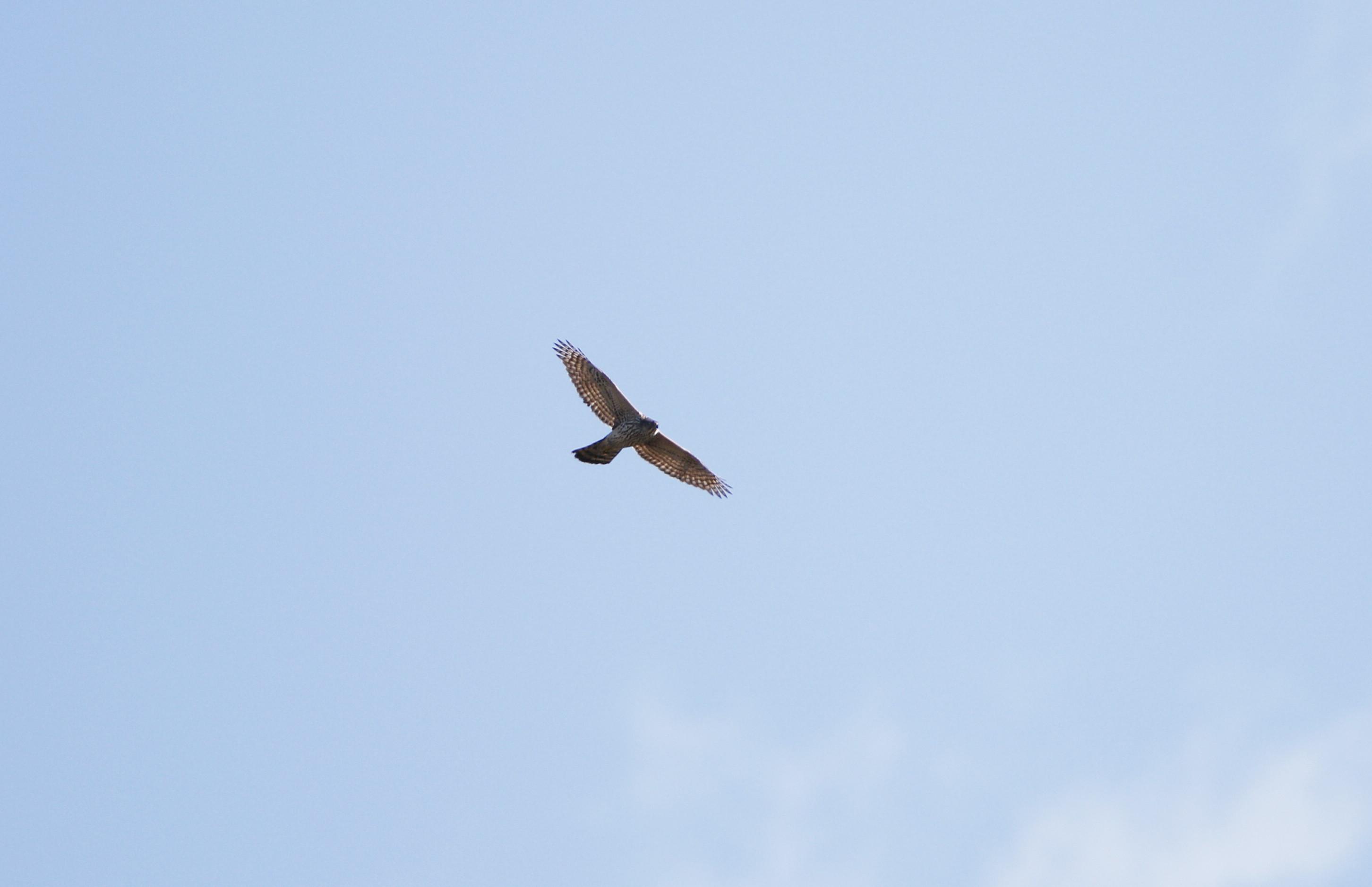 ミサゴ狙いも、飛ばない日は何を撮る_f0239515_215346.jpg