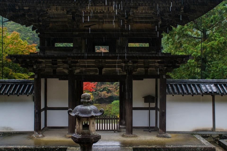 2017奈良紅葉~円成寺_e0363038_8525768.jpg