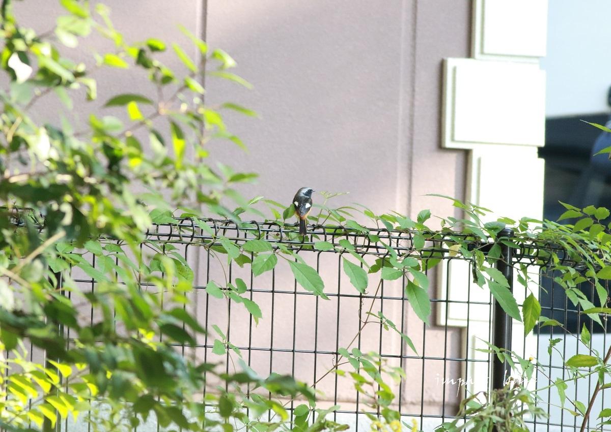 冬鳥さん、いらっしゃ~い(*^^*)_a0355908_13330122.jpg