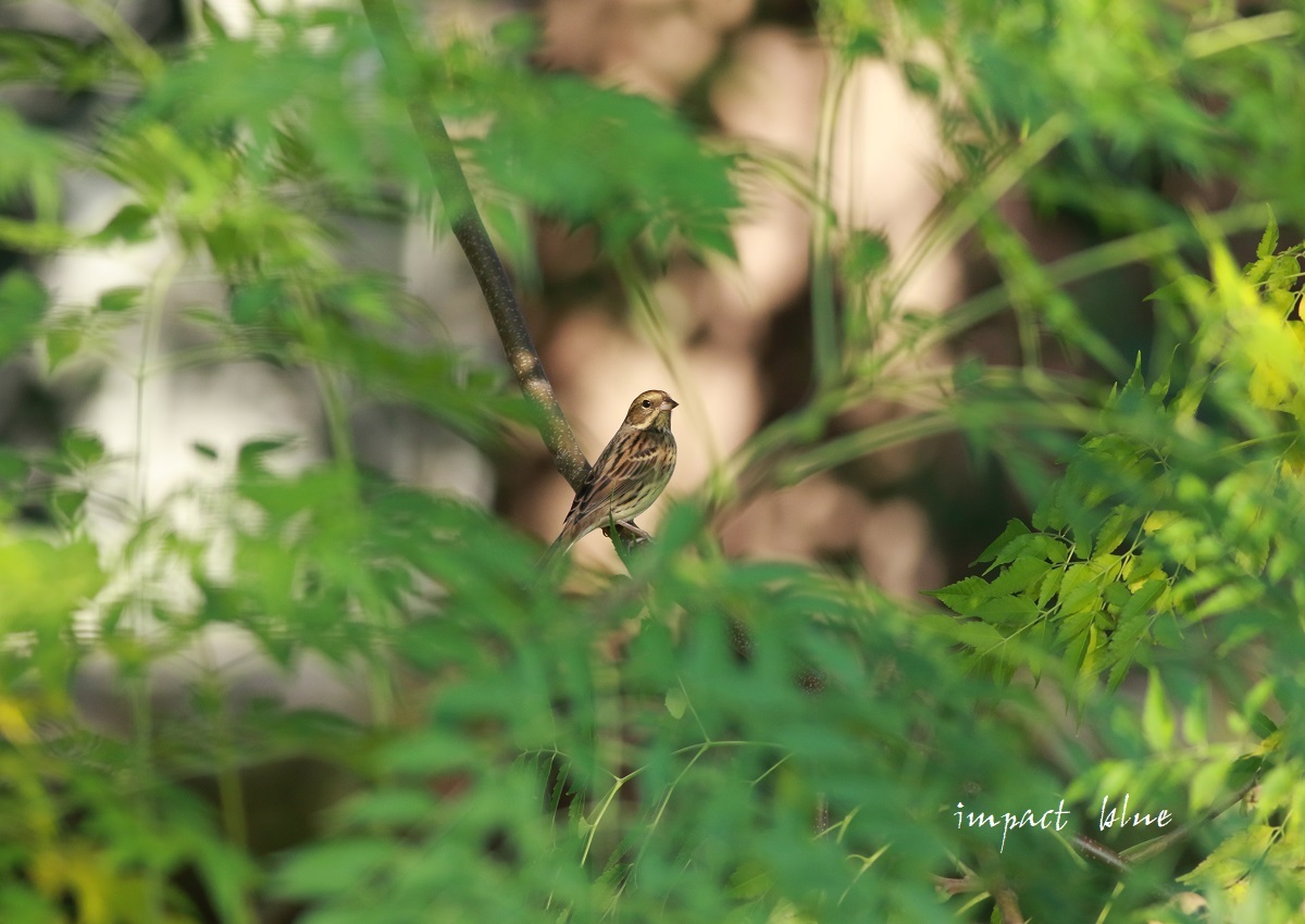 冬鳥さん、いらっしゃ~い(*^^*)_a0355908_13330841.jpg