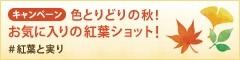 色とりどりの秋!お気に入りの紅葉ショット!with ことりっぷ#紅葉と実り