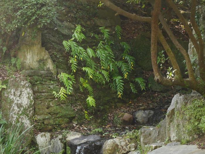 紅葉渓庭園にて_b0093754_22333459.jpg
