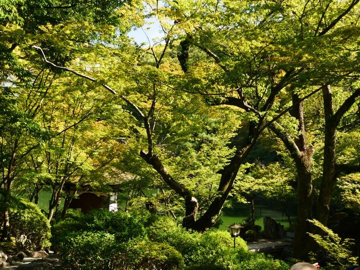 紅葉渓庭園にて_b0093754_2233473.jpg