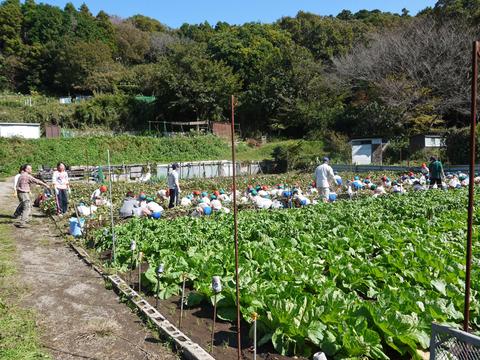 六国見山に大歓声、幼稚園児たちが段々畑で芋掘り10・30_c0014967_8165585.jpg