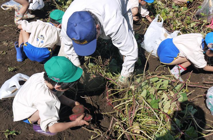 六国見山に大歓声、幼稚園児たちが段々畑で芋掘り10・30_c0014967_816797.jpg