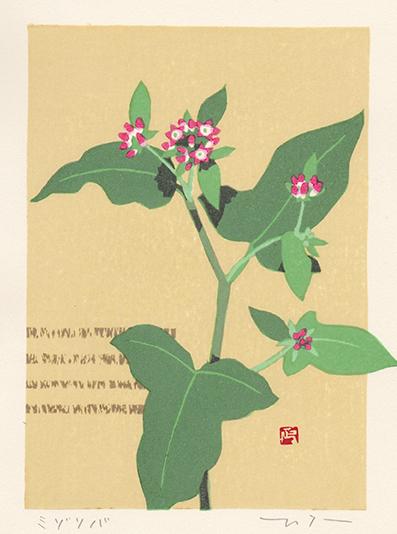 野の花だより(ミゾソバ)_c0305770_10303911.jpg