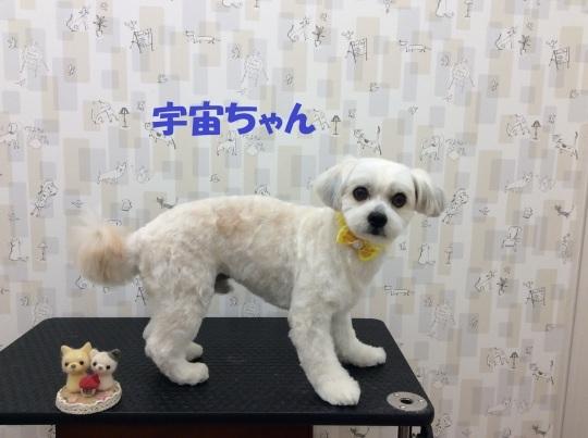 トリミング紹介 ~10月後半~_c0315684_12321627.jpg
