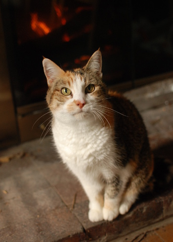 暖炉とSandy_b0253205_07424461.jpg