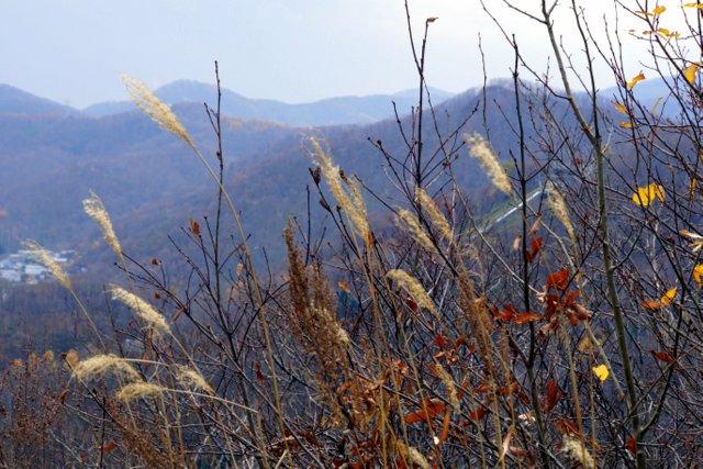 2017年11月3日(金・祝) 三角山(標高311m)_a0345007_17151428.jpg
