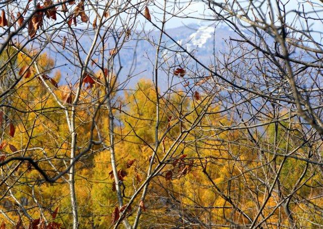 2017年11月3日(金・祝) 三角山(標高311m)_a0345007_1717375.jpg
