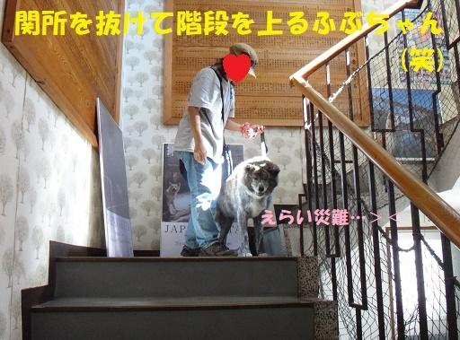 f0121712_15395423.jpg