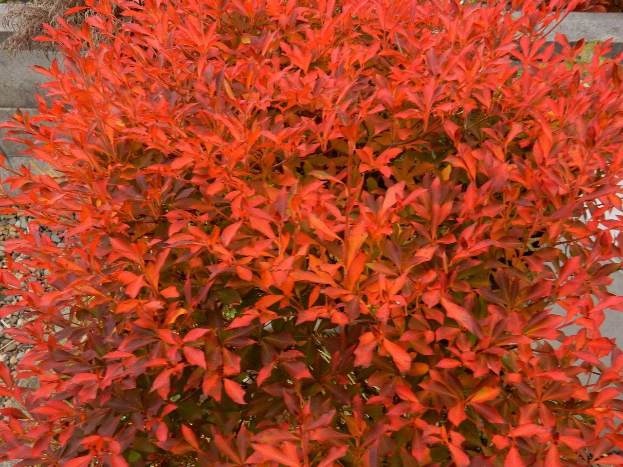 よく見ると一枚一枚の葉の色だって違います_c0025115_21112730.jpg