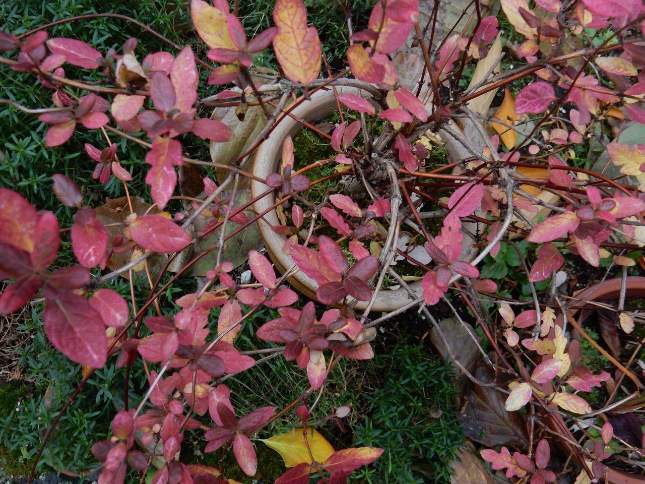 よく見ると一枚一枚の葉の色だって違います_c0025115_21113861.jpg